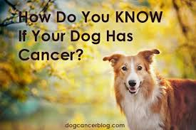 how do you know if your dog has cancer