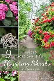 beautiful flowering shrubs for zones 7