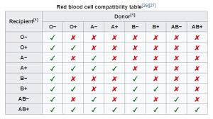Visual Red Blood Cell Compatibility Table Do You Know
