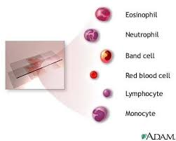 Cbc With Differential Chart Complete Blood Count Cbc Differential Platelets