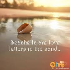 sea shell quotes seashell quotes google search beach quotes i love the