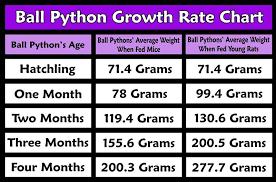 Growth Chart Ball Python Ball Python Morphs Ball Python