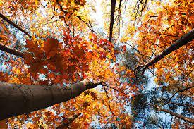 Fall MacBook Wallpapers - Top Free Fall ...