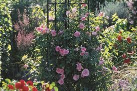 rose obelisks adorable gift ideas for