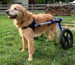 how to make a dog wheelchair a