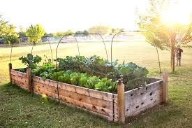 Small Picture Modren How To Build Raised Garden Bed Beds Intended Inspiration