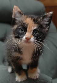 June is Adopt a Cat Month Training Your New Cat to Stop