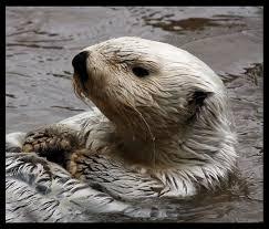 sea otter in seattle washington area