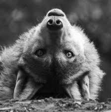 Resultado de imagem para enjoy the day wolf