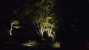 How To Light Up A Picture Always Light Up A Japanese Maple Landscape Lighting
