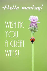 Ladybug Quotes Interesting Hello Monday Ladybird Ladybug Monday Quotes Monday Image 48