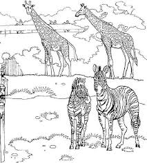 Small Picture giraffe and zebra coloring page funnycrafts