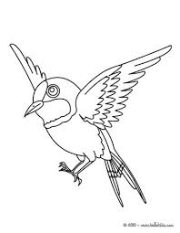 Small Picture Bird online coloring pages Hellokidscom