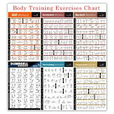 Bodybuilding Exercises Chart Free Download 65 Veracious Workouts Chart