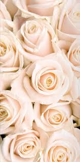 Pin Van Niara Gallant Op Wallpapers Hintergründe Blumen En Rosen