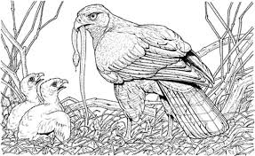 Small Picture Eagles Nest Printables Coloring Coloring Pages
