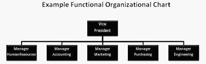 Functional Org Chart Business Business Business Organizational