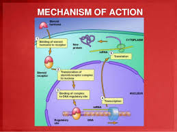 mechanism of action of corticosteroids pdf