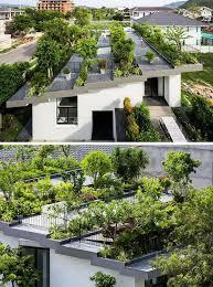 green roof garden rooftop garden