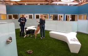 Dog Park Vending Machines Custom How To Start An Indoor Dog Park Jesse Pinterest Indoor Dog