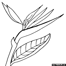 Small Picture Bird of Paradise flower online coloring page Stained glass 2