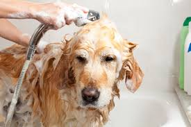 steps for bathing your dog