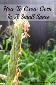 yes you can grow corn in a small space try planting in using a square