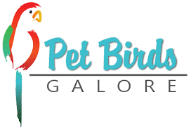 Wholesale Birds & Pet Birds Adelaide | Pet Birds Galore - Pet Birds ...