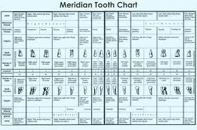 Tooth Chart Every Tooth Has An Energy Meridian Running