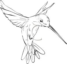 simple hummingbird drawing. Simple Drawing Hummingbird Art  Royalty Free Hummingbird Clipart Inside Simple Drawing F