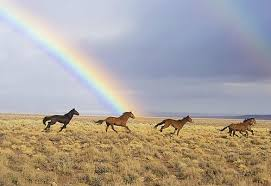 What Is the <b>Rainbow Color</b> Order? Understanding ROYGBIV