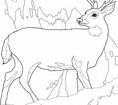 Small Picture Line Drawings Coloring Pages Deer New In Interior Tablet