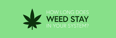 How Long Does Marijuana Stay In System Chart How Long Does Weed Stay In Your System Adt Healthcare
