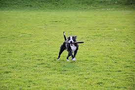 Resultado de imagen de parque perros