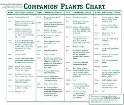 Companion Planting Smart Health Talk Salvatores Italian