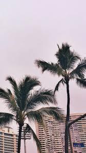 palm trees tumblr. 3 Palm Trees Tumblr E