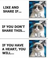 Best of Grumpy Cat on Pinterest | Grumpy Cat Quotes, Grumpy Cat ... via Relatably.com