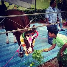 pongal festival in singapore singapore  thenewpaper happy pongal festival tnpsun