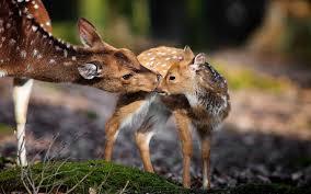 Nature, Animals, Deer, Baby Animals ...