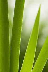 grass blade close up. Blades Of Grass. Machinery Closeup Grass Blade Close Up S