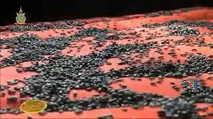 เรื่องเล่าเช้านี้ ผงะ แมลงปีกแข็งยึดบ้านที่ขอนแก่น-กองทัพแมงเม่านับหมื่นตัวบุกตอมแสงไฟทั่วอุดรฯ  - YouTube