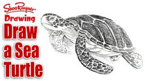 Small Picture How to draw a Sea Turtle YouTube