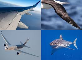 Aircraft Design Projects For Engineering Students Biomimicry Engineering In Natures Style Commercial