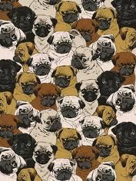 pug puppies ipad wallpaper. Exellent Puppies For Pug Puppies Ipad Wallpaper
