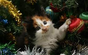 Christmas Kitten Wallpapers (67+ ...