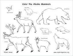 Coloring Pages Nature Animals Coloring Pages Of Animals In Their