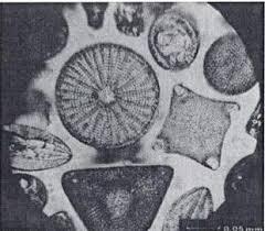 Resultado de imagen para microscopio de leeuwenhoek  de la Universidad de Utrecht
