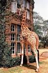 Жираф  в доме 156