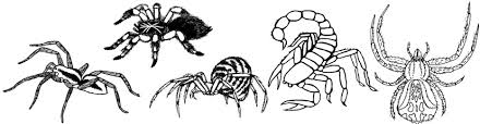 Small Picture Invertebrate Coloring Pages
