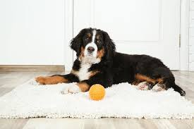 top 5 best rugs for dogs